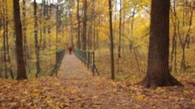 Ξύλινη γέφυρα αψίδων, μπροστινή άποψη, οπίσθια εστίαση ραφιών απόθεμα βίντεο