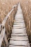 Ξύλινη γέφυρα για πεζούς μέσω των ξηρών καλάμων Στοκ Φωτογραφία