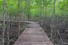 Ξύλινη γέφυρα στο δάσος μαγγροβίων στοκ φωτογραφία με δικαίωμα ελεύθερης χρήσης