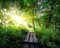 Ξύλινη γέφυρα στο δάσος Στοκ εικόνα με δικαίωμα ελεύθερης χρήσης