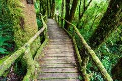 Ξύλινη γέφυρα στο ίχνος φύσης angka στο εθνικό πάρκο doi inthanon Στοκ εικόνα με δικαίωμα ελεύθερης χρήσης