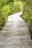 Ξύλινη γέφυρα στο δασικό apiculata Rhizophora. Στοκ φωτογραφία με δικαίωμα ελεύθερης χρήσης