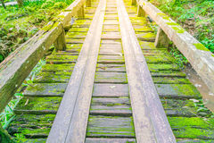 Ξύλινη γέφυρα στο τροπικό πράσινο δάσος που καλύπτεται με το βρύο Στοκ εικόνα με δικαίωμα ελεύθερης χρήσης