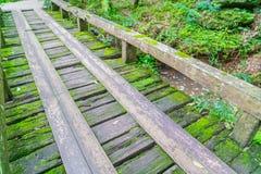 Ξύλινη γέφυρα στο τροπικό πράσινο δάσος που καλύπτεται με το βρύο Στοκ Εικόνες