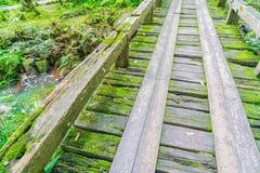 Ξύλινη γέφυρα στο τροπικό πράσινο δάσος που καλύπτεται με το βρύο Στοκ Φωτογραφία