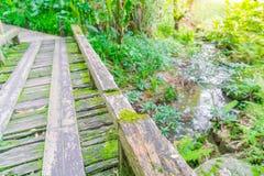 Ξύλινη γέφυρα στο τροπικό πράσινο δάσος που καλύπτεται με το βρύο Στοκ φωτογραφίες με δικαίωμα ελεύθερης χρήσης