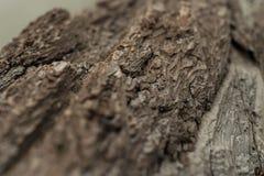 Ξύλινη γενειάδα δίπλα σε Stà ¼ dlhà ¼ tte, Αυστρία, Grossglockner Στοκ Φωτογραφίες