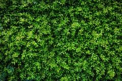 Ξύλινη ζωγραφική στον πράσινο τοίχο τέχνης φύλλων φυσικό Στοκ Φωτογραφίες