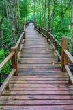 Ξύλινη διάβαση πεζών και άφθονο δάσος μαγγροβίων στη νότια Ταϊλάνδη Στοκ Εικόνα