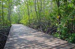 Ξύλινη διάβαση πεζών στο δάσος μαγγροβίων Στοκ εικόνα με δικαίωμα ελεύθερης χρήσης