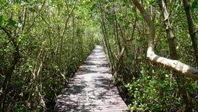 Ξύλινη διάβαση πεζών στο δάσος mangroove στοκ φωτογραφία με δικαίωμα ελεύθερης χρήσης