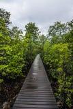 Ξύλινη διάβαση πεζών στο έλος μαγγροβίων, Ταϊλάνδη Στοκ φωτογραφία με δικαίωμα ελεύθερης χρήσης