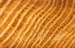 Ξύλινη κινηματογράφηση σε πρώτο πλάνο σύστασης οργανική σύσταση ανασκόπησης Grunge ξύλινο Στοκ Φωτογραφία