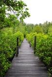 Ξύλινη μακριά γέφυρα στο μαγγρόβιο Στοκ φωτογραφίες με δικαίωμα ελεύθερης χρήσης