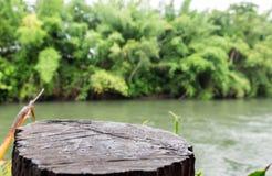Ξύλινη ξυλεία στη θολωμένη πράσινη ζούγκλα Στοκ εικόνες με δικαίωμα ελεύθερης χρήσης