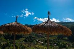 Ξύλινη ομπρέλα στη φυτεία τσαγιού στο ANG Khang, Chiang Mai Doi Στοκ φωτογραφία με δικαίωμα ελεύθερης χρήσης