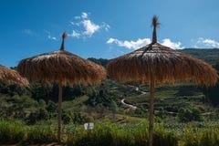 Ξύλινη ομπρέλα στη φυτεία τσαγιού στο ANG Khang, Chiang Mai Doi Στοκ Φωτογραφίες