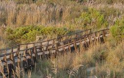 Ξύλινη πανοραμική γέφυρα πέρα από τους αμμόλοφους άμμου της Τοσκάνης Στοκ Φωτογραφία