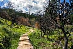 Ξύλινη πορεία στον περίπατο του Charles Δαρβίνος μπλε εθνικό πάρκο βουνών στοκ εικόνες