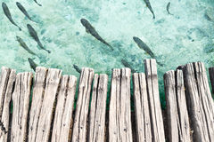 Ξύλινη πλατφόρμα επάνω από το σαφές τυρκουάζ νερό με τα ψάρια Στοκ Εικόνα