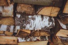 Ξύλινη σημύδα ακτίνων Στοκ Φωτογραφίες