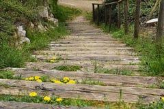 Ξύλινη σκάλα Στοκ εικόνες με δικαίωμα ελεύθερης χρήσης