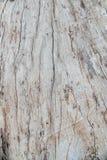 Ξύλινη σχέδιο ή σύσταση φλοιών φύσης Παλαιό τραχύ καφετί φυσικό ξύλινο αφηρημένο υπόβαθρο δέντρων Στοκ εικόνες με δικαίωμα ελεύθερης χρήσης