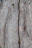 Ξύλινη σχέδιο ή σύσταση φλοιών φύσης Παλαιό τραχύ καφετί φυσικό ξύλινο αφηρημένο υπόβαθρο δέντρων Στοκ Φωτογραφία