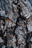 Ξύλινη σχέδιο ή σύσταση φλοιών φύσης Παλαιό τραχύ καφετί φυσικό ξύλινο αφηρημένο υπόβαθρο δέντρων Στοκ εικόνα με δικαίωμα ελεύθερης χρήσης