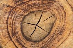 Ξύλινη σύσταση (δέντρα από το δάσος) Στοκ Φωτογραφίες