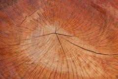 Ξύλινη σύσταση (δέντρα από το δάσος) Στοκ Εικόνες