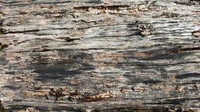 Ξύλινη σύσταση δέντρων Στοκ Φωτογραφία