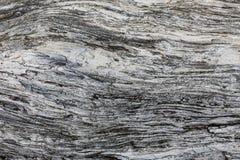 Ξύλινη σύσταση Γκρίζος πίνακας ξυλείας με τις ξεπερασμένες γραμμές ρωγμών Φυσικό υπόβαθρο για το shabby κομψό σχέδιο Γκρίζο ξύλιν Στοκ φωτογραφία με δικαίωμα ελεύθερης χρήσης