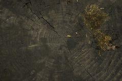 Ξύλινη σύσταση με το βρύο Στοκ Φωτογραφίες