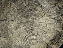 Ξύλινη σύσταση σε ένα στέλεχος Στοκ Εικόνα
