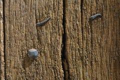 Ξύλινη σύσταση σιταριού Στοκ Φωτογραφίες