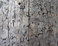 Ξύλινη σύσταση, σύσταση ξυλείας, υπόβαθρο φύσης Στοκ Εικόνες