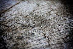 Ξύλινη σύσταση του κομμένου κορμού δέντρων, κινηματογράφηση σε πρώτο πλάνο στοκ εικόνα