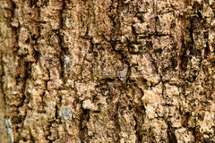 Ξύλινη σύσταση φλοιών επιφάνειας Παλαιό υπόβαθρο σχεδίων φλοιών ξύλινο Στοκ Εικόνα