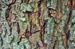 Ξύλινη σύσταση φλοιών στο πράσινο και καφετί χρώμα Στοκ εικόνες με δικαίωμα ελεύθερης χρήσης
