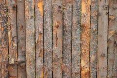 Ξύλινη σύσταση φλοιών Στοκ Φωτογραφία