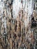 Ξύλινη σύσταση Cconut Στοκ Φωτογραφίες