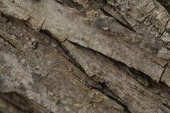 Ξύλινη σύσταση Grunge φλοιών Στοκ φωτογραφίες με δικαίωμα ελεύθερης χρήσης