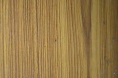 Ξύλινη φυσική γλυπτική σχεδίου… του δάσους στοκ φωτογραφία