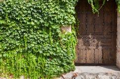 Ξύλινοι πόρτα και κισσός στοκ εικόνες με δικαίωμα ελεύθερης χρήσης