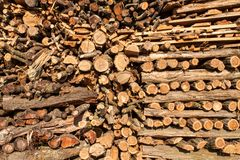 Ξύλινος έτοιμος για το χειμώνα Οικολογική ξύλινη θέρμανση Εργασία στη δασονομία Στοκ φωτογραφίες με δικαίωμα ελεύθερης χρήσης