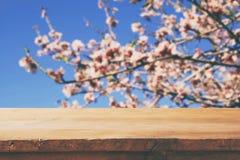 Ξύλινος αγροτικός πίνακας μπροστά από το άσπρο δέντρο ανθών κερασιών άνοιξη φιλτραρισμένη τρύγος εικόνα επίδειξη προϊόντων και έν Στοκ εικόνα με δικαίωμα ελεύθερης χρήσης