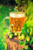 Ξύλινος κορμός μπύρας πιντών χρυσός Στοκ φωτογραφίες με δικαίωμα ελεύθερης χρήσης