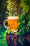 Ξύλινος κορμός μπύρας πιντών χρυσός Στοκ Εικόνες