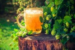 Ξύλινος κορμός μπύρας πιντών χρυσός Στοκ Εικόνα